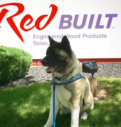 A dog sits happily in front of a RedBuilt sign